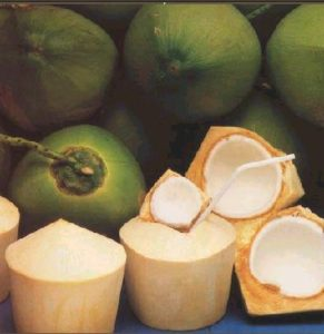 coconut-young-green-open-and-closed-answers